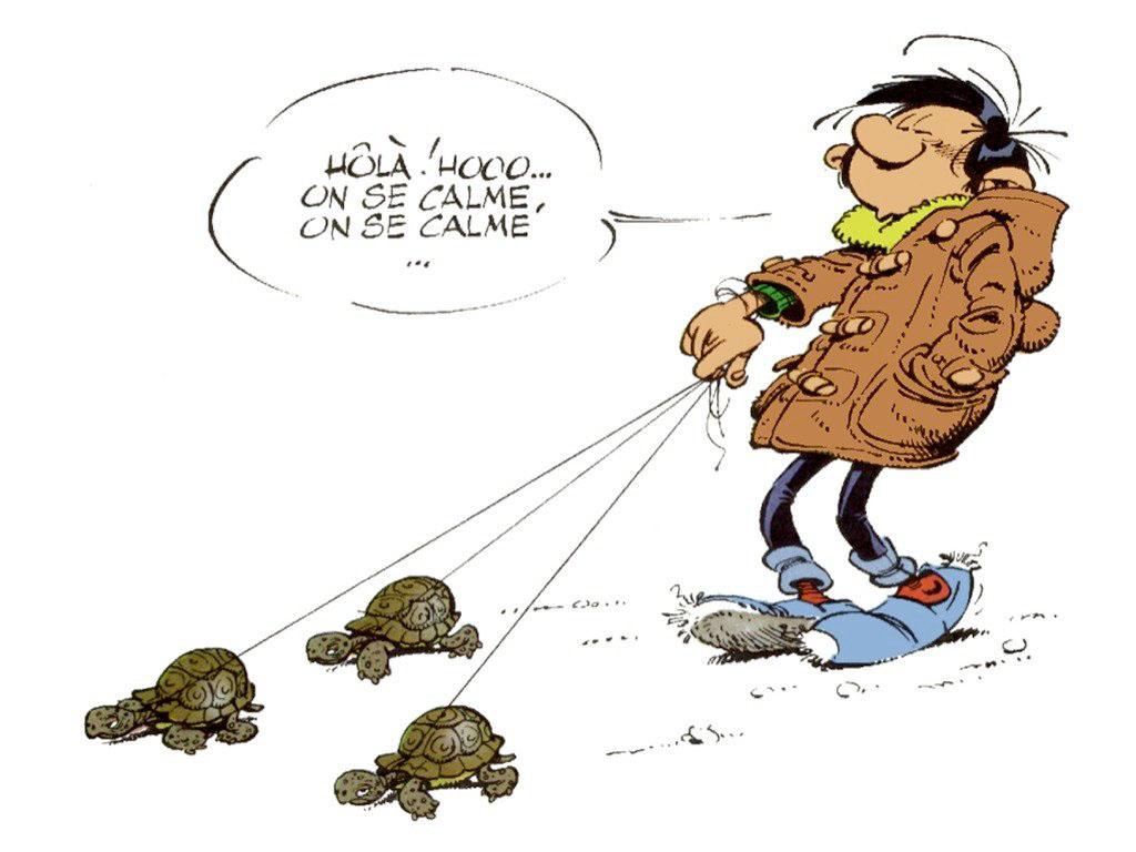 image drole belge