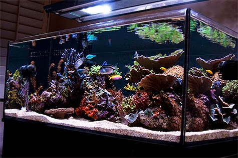 Aquarium test kits which parameters you should test for for Saltwater fish tank kit