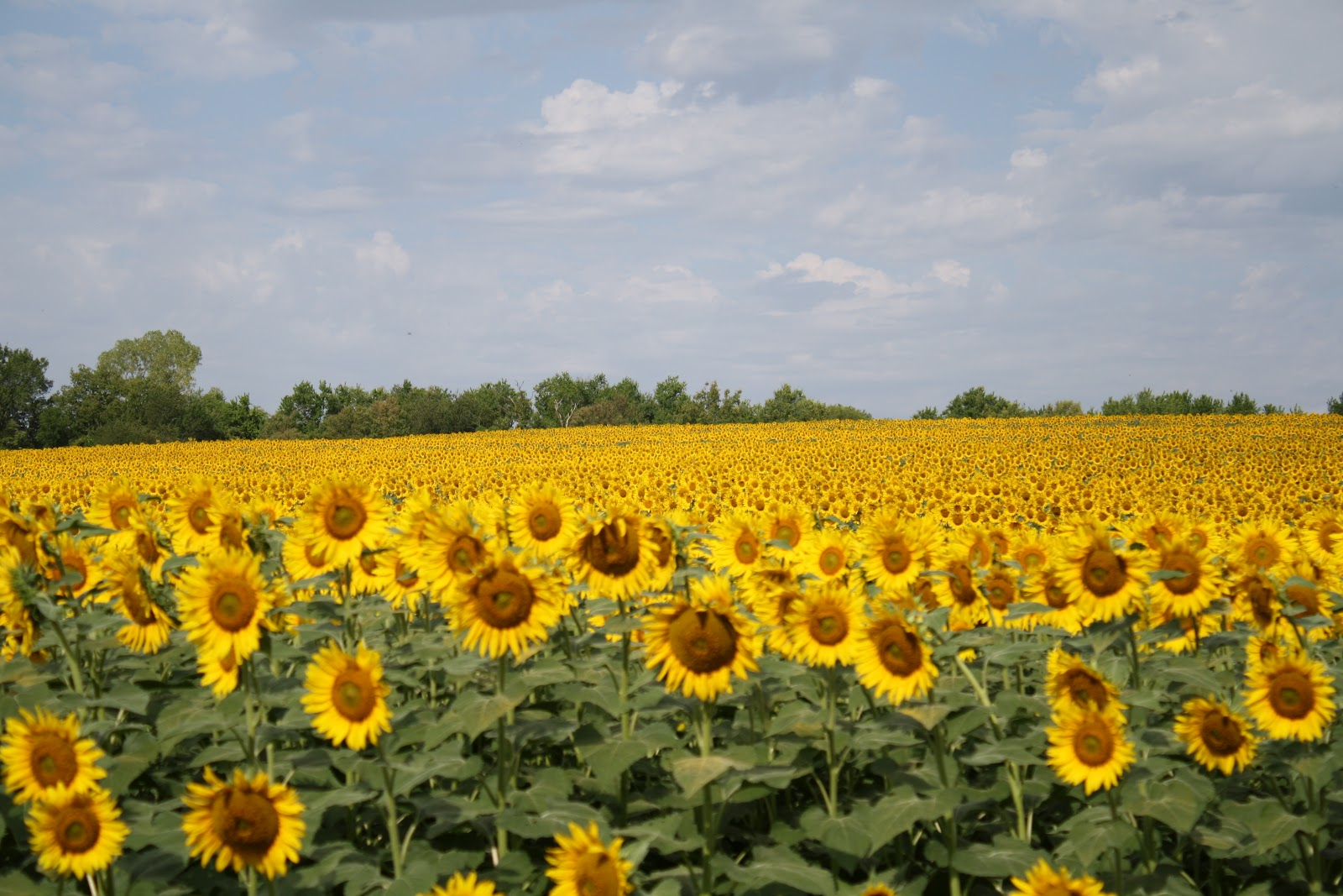 The Best Moments The Sunflower Farm