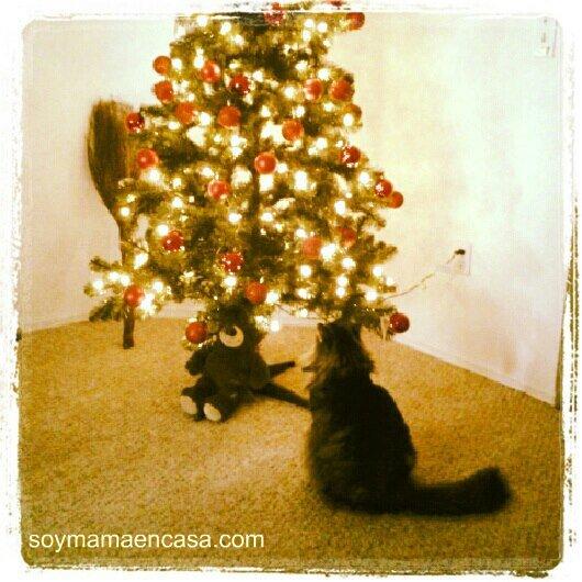 gata esperando la navidad
