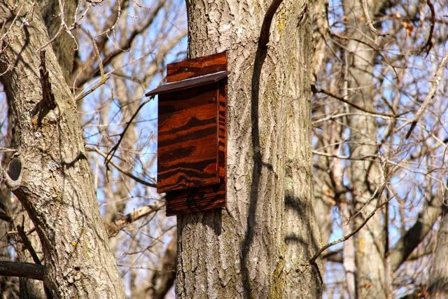 newly installed bat house (side view)