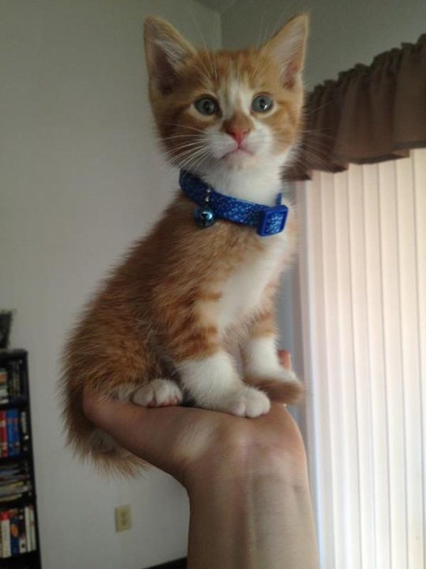funny cat pictures, cute kitten