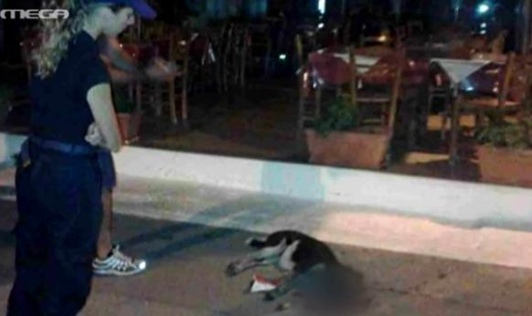 Πρόστιμο 30.000 ευρώ στον ταβερνιάρη που σκότωσε τη σκυλίτσα