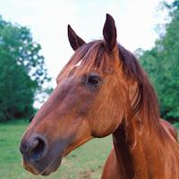 13. Carne de cavalo