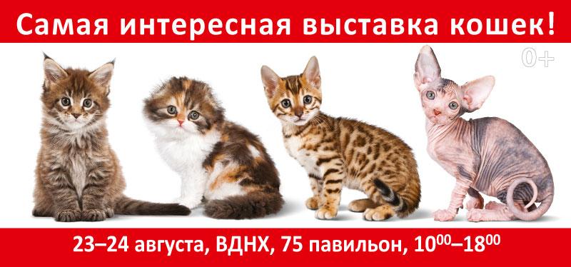 ИнфоКот — самая интересная выставка кошек!