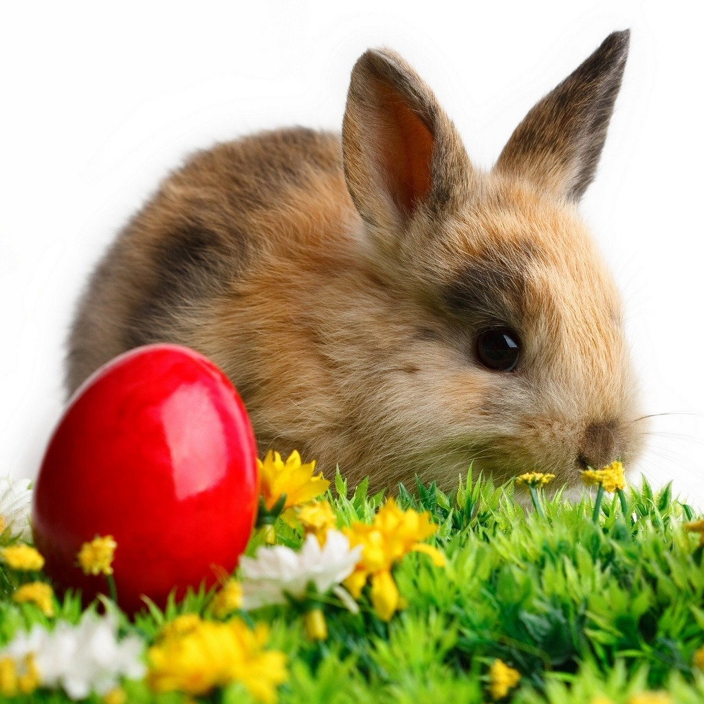 http://1.bp.blogspot.com/-ZujsamuYids/UThHbbLwjgI/AAAAAAAAIfw/QyZILTxQoaQ/s1600/easter-download-free-wallpapers.jpg