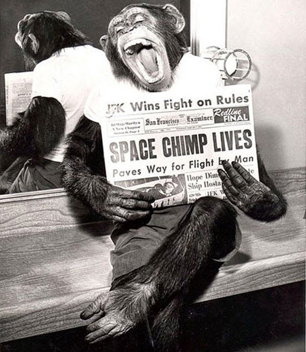 A space chimp posing to camera