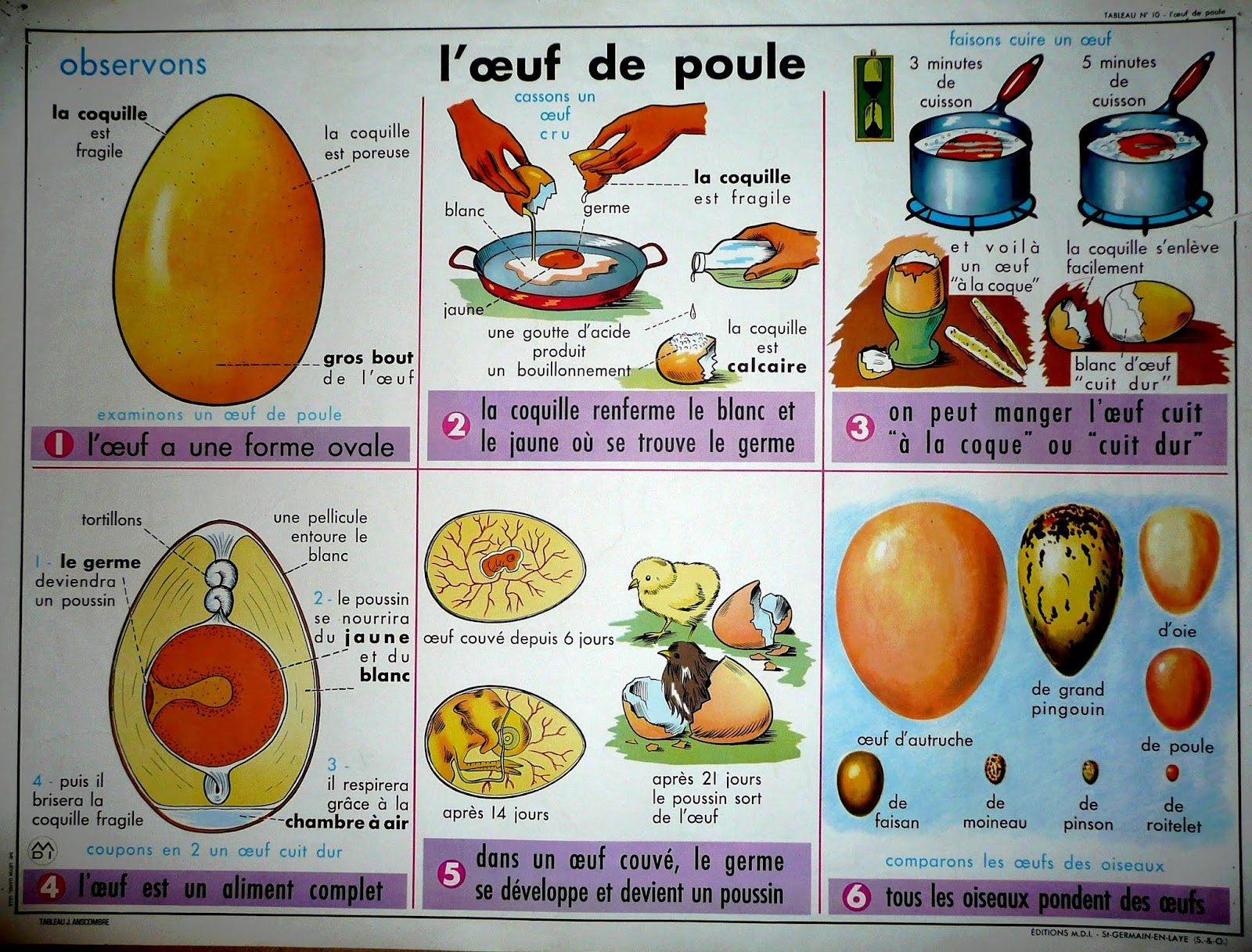 Panique au poulailler nouvelle version page 460 big for Oeuf de poule mou