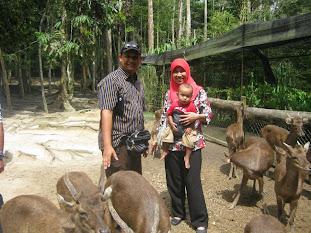 Deer Land Kuala Gandah
