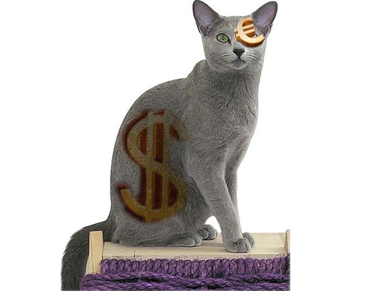 Kucing persia mahal