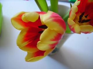 april tulpen