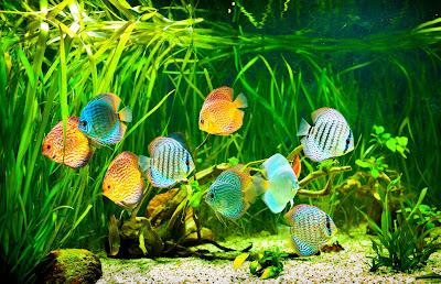 Rio de aguas claras con peces de colores