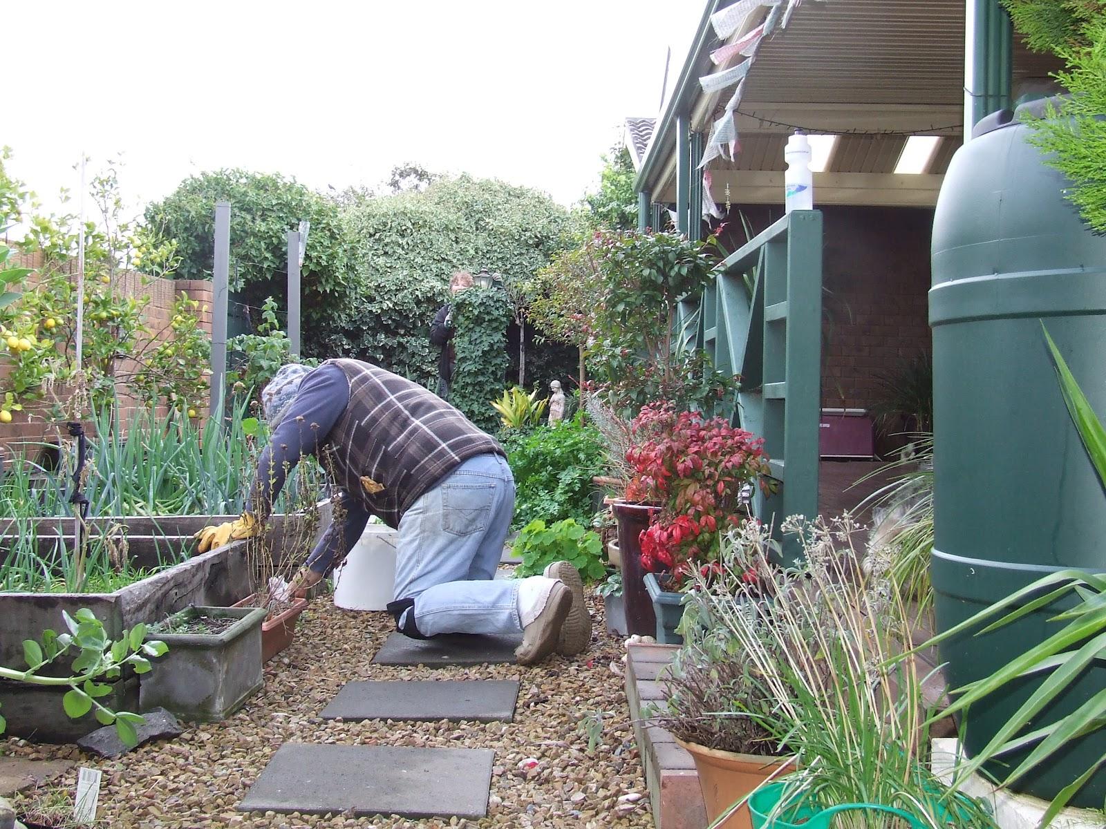 around the garden in winter the greening of gavin