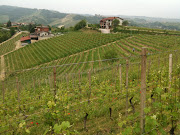 If you might like to see some pictures of the Cascina Francia vineyard, .