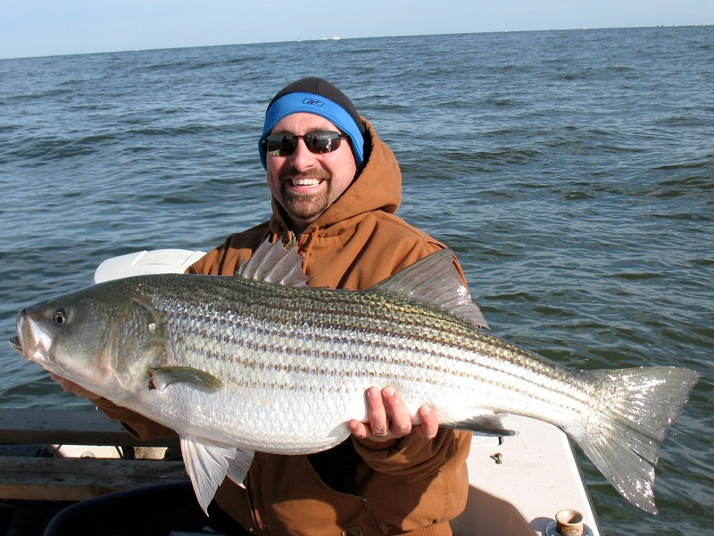 The lord geekington november 2011 for Chesapeake bay striper fishing