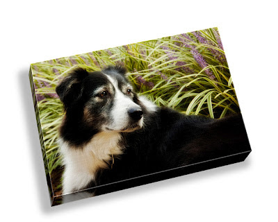 Alair Photography: Treasure Your Pets: Canvas Sample