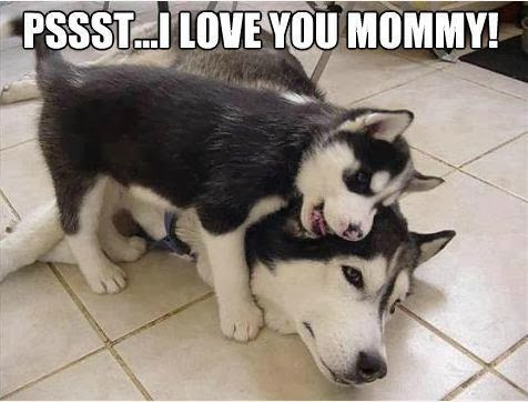 I Love You Husky Puppy You know she has had one of