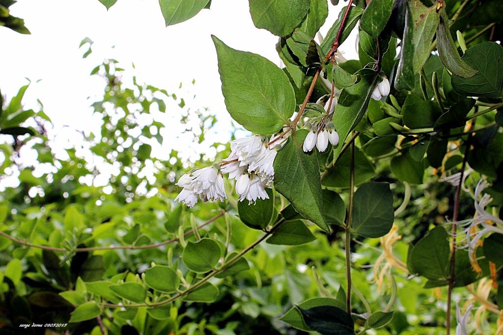 Nature en ligne le photoblog de serge fleurs de for Fleurs jardin printemps
