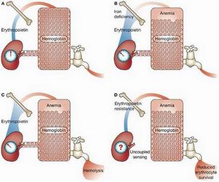 ebook Immobilisation of DNA on Chips