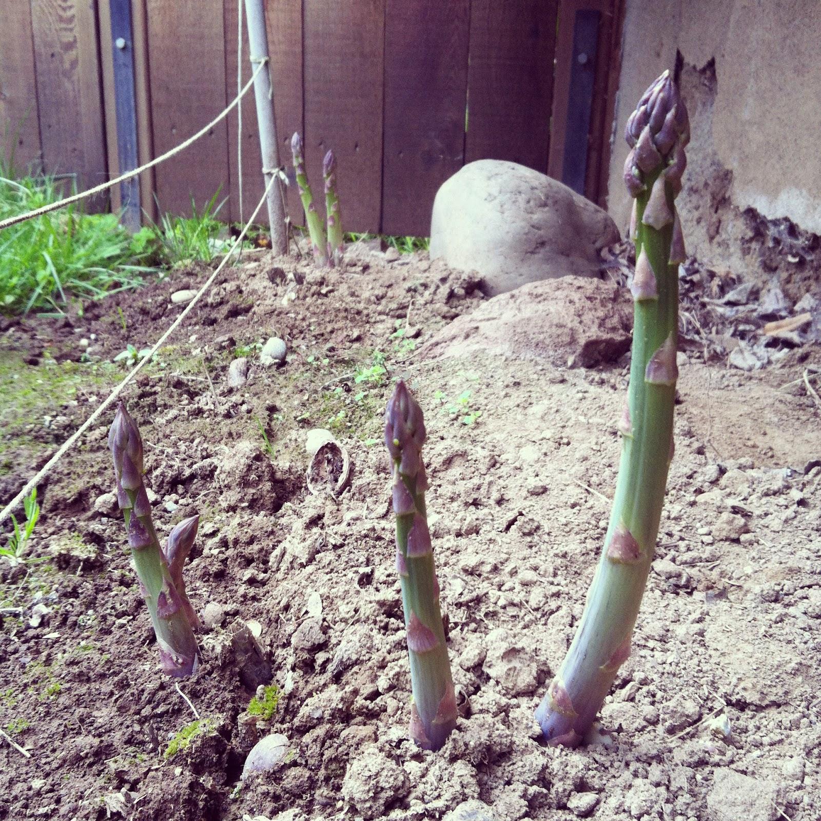 Blue Bamboo Spa Lutz Reviews