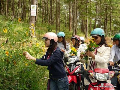 Dalat city - On the way to Thien vien truc lam - gather marigold