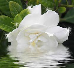Segala yang baik adalah milik Allah, segala kekurangan adalah dari kelemahan diriku sendiri