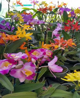 Expo de orquidea com oficina de cultivo da planta gratis em dois shoppings do Rio