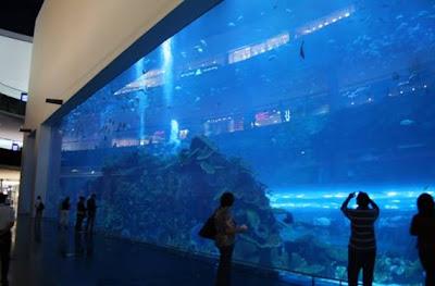 Acuario de Dubahi. Emiratos Arabes. Lugares Sorprendentes del Mundo. Turismo en Dubahi. QUe visitar en Dubahi