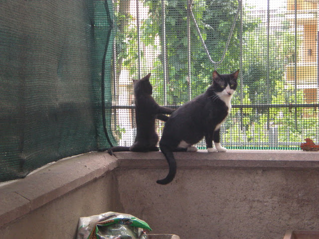 I miei gatti adottati al canile della Muratella