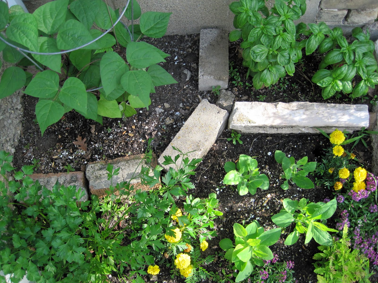 Mr micawber 39 s recipe for happiness a very small garden for Very small trees for landscaping