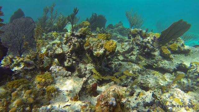 hog cay reef