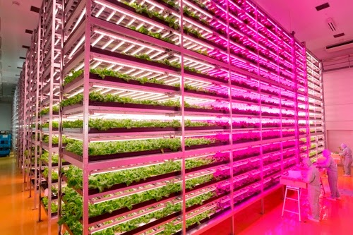 Japanese Farmer Builds High-Tech Indoor Veggie Factory