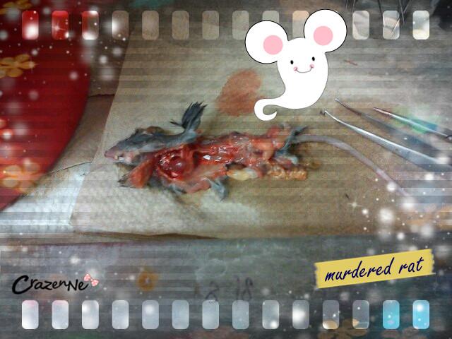 lab dead rat