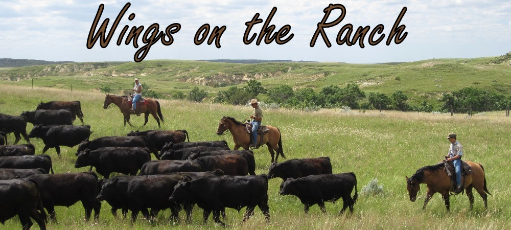 Wings on the Ranch