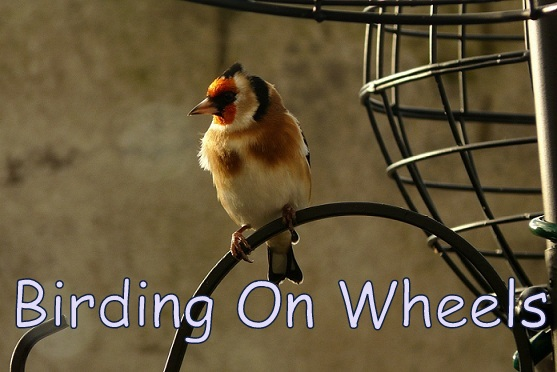 Birding On Wheels