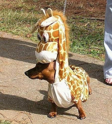 Giraffe Dogs pictures