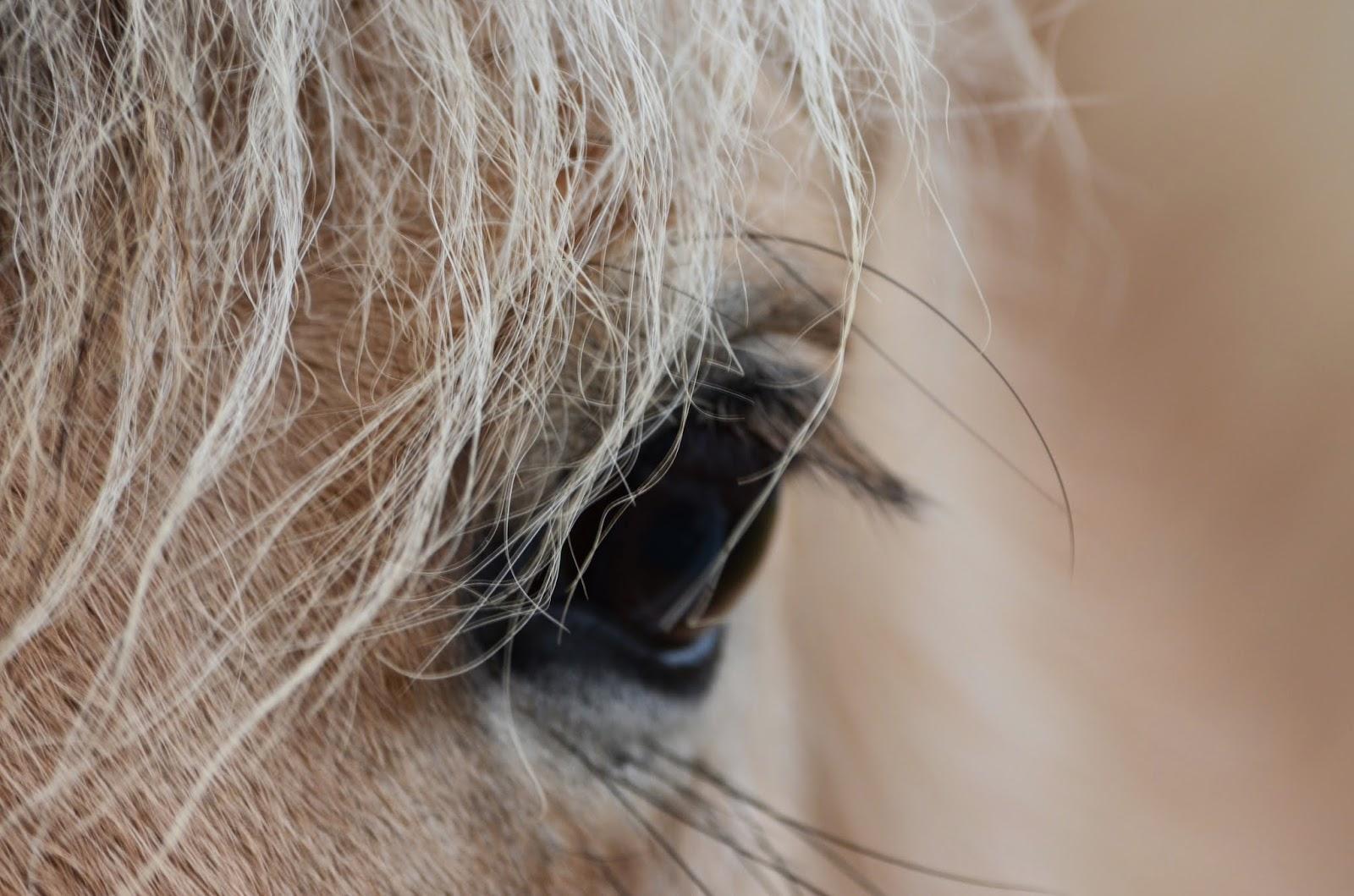 Kind horse eye