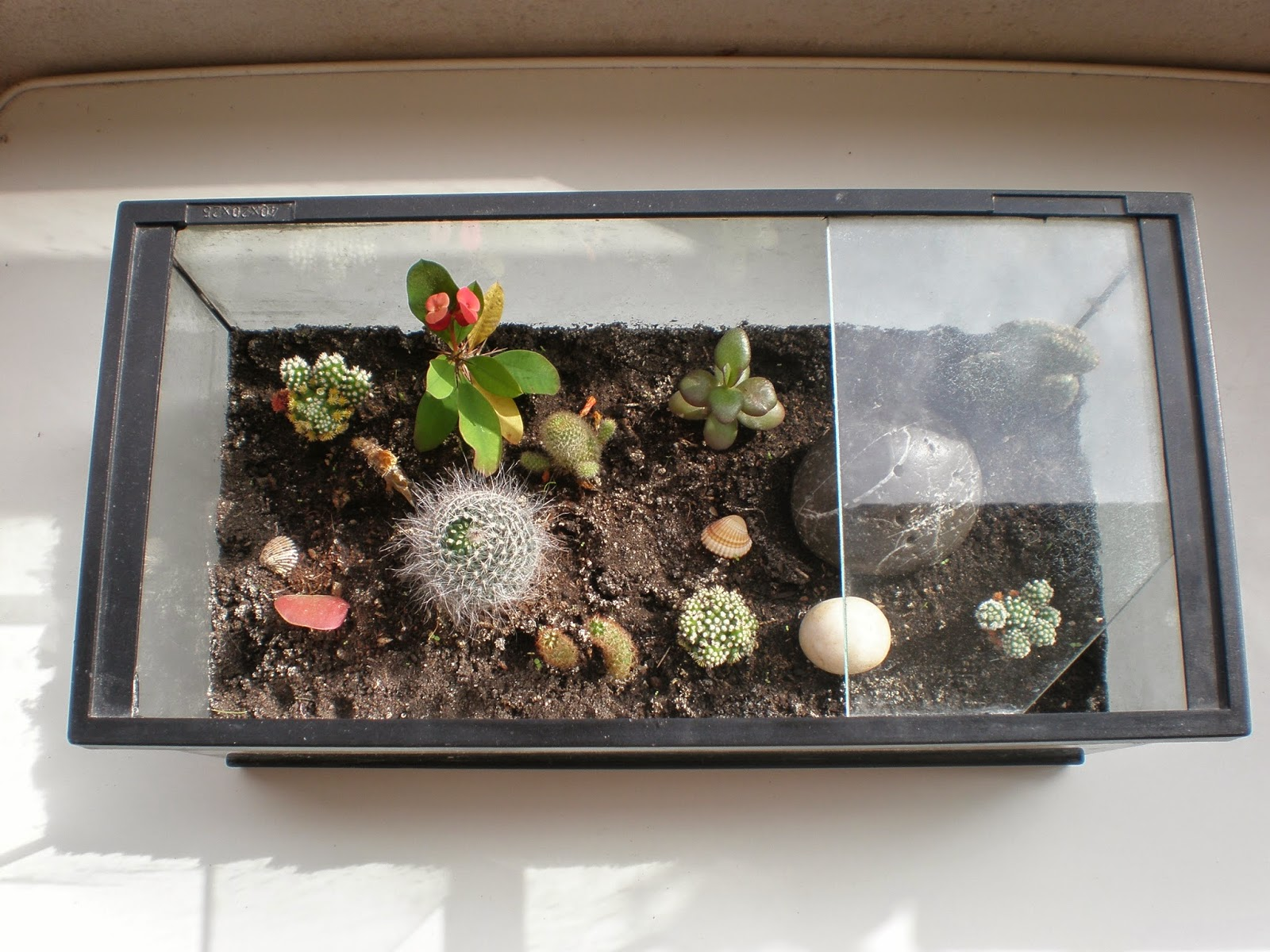 Ingles What S The Problem 193 How To Make A Cactus Terrarium