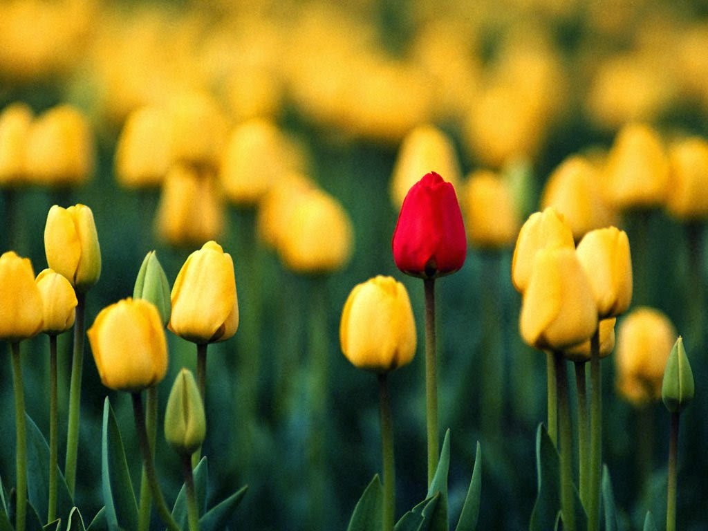 http://www.duskyswondersite.com/wp-content/uploads/2011/03/tulips-13.jpg