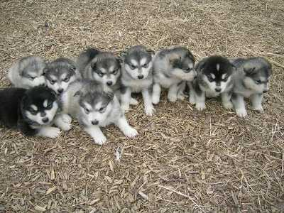 Dogs for sale near me