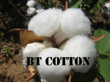 research papers on bt cotton