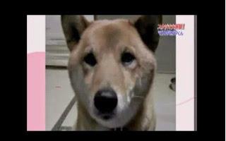El perro que causa sensacion en la internet mira lo que hace