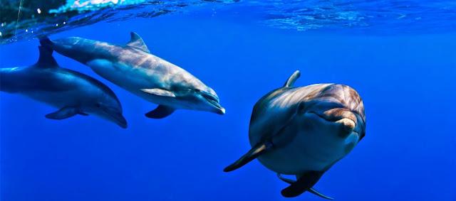 Delfines y mamiferos