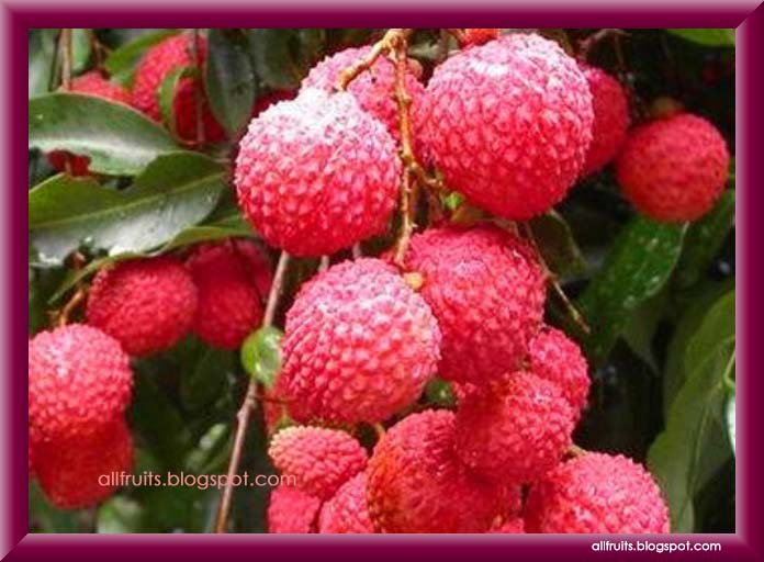 Fruits Name Starts With The Letter Quot L Quot Fruits In The World