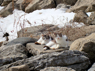 pair of feral cat sitting on a rock