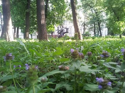 Бывший сад у Гурьевского приюта - теперь парк с фонтаном, лебедями и черепахами