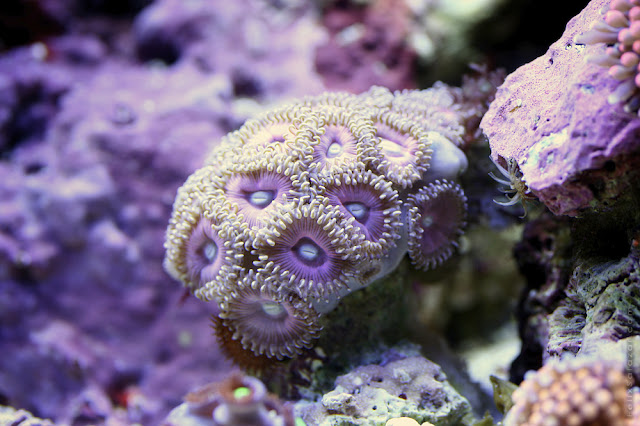 Underwater Macro Photography by Felix Salazar