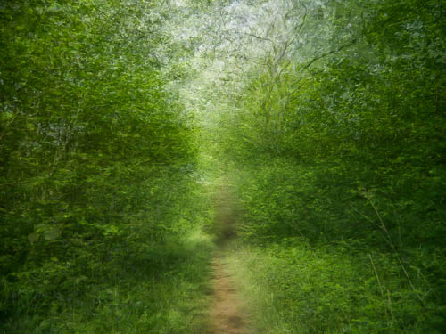 A Walk in the Woods 3  © Graham Dew 2015
