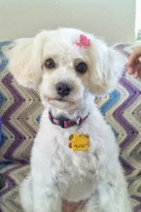 Suzanne (Now Daisy) looks like a show doggie