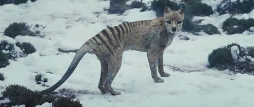 Scientists hunt for the extinct Tasmanian tiger to prove it still exists